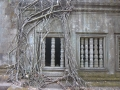racines fenêtres Bang Mealea.JPG