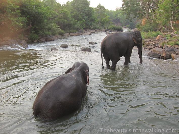 10-bain elephants tad lo.JPG