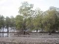 Balade dans la mangrove à marée basse