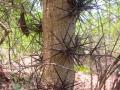 3-arbre2.jpg