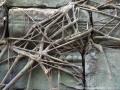 racines Bang Mealea.JPG