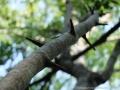 detail arbre Bang Mealea.JPG