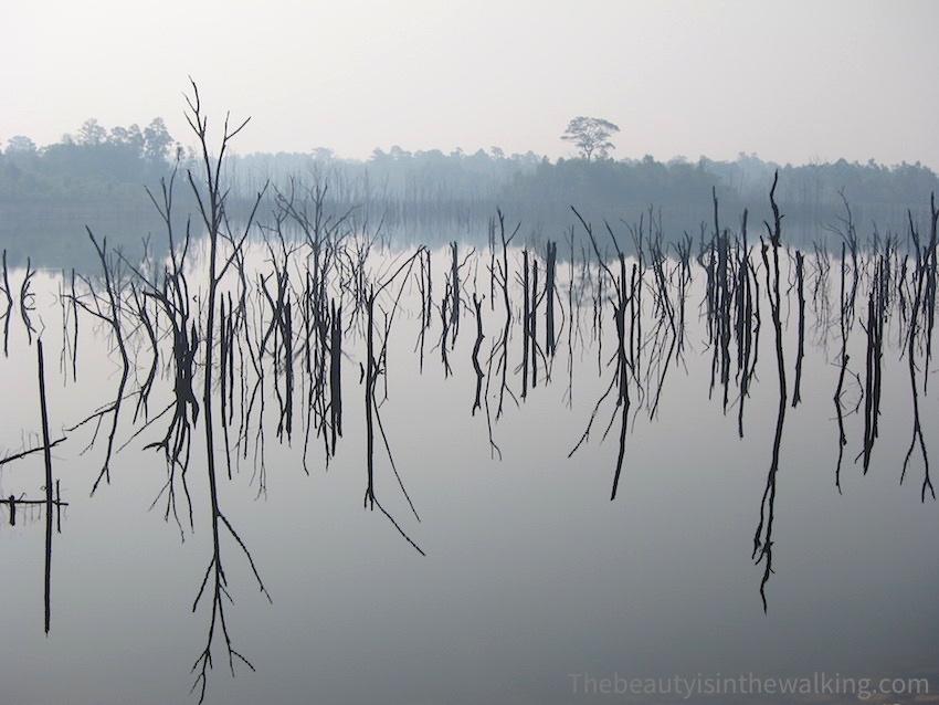 12-arbres dans l'eau Nam Theun.JPG